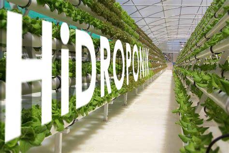 membuat nutrisi hidroponik sederhana tanaman metro hidroponik