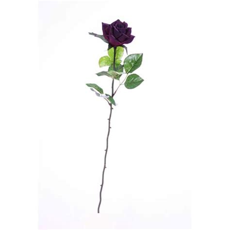 pub shop roses single stem half open purple
