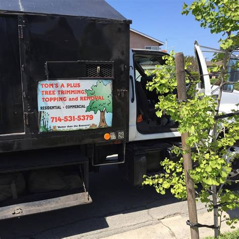 S Garden Grove Ca Tom S A Plus Tree Trimming Topping Removal Tree