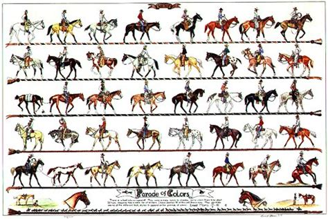 equine color calculator posters vaquero enterprises