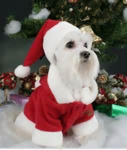 imagenes de animales navidad imagenes graciosas para navidad con animales imagenes