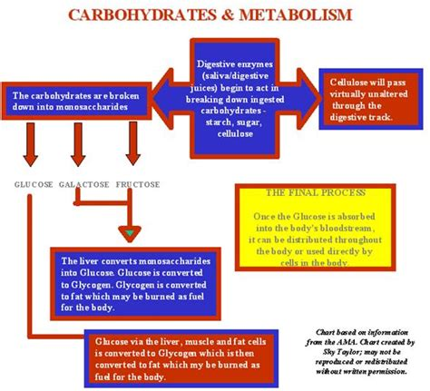 d series carbohydrates carbohydrates metabolism and violations