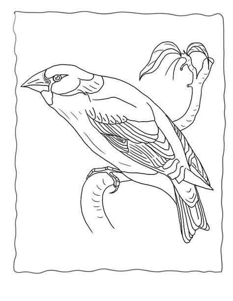 Scroll Coloring Page Az Coloring Pages Scroll Coloring Page
