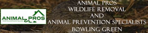 attic bowling green ky 2017 bowling green wildlife bat removal animal pros ky bat