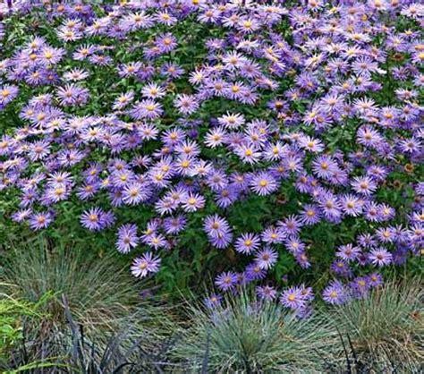 piante fioriscono in inverno piante perenni fioriscono in autunno e inverno paperblog
