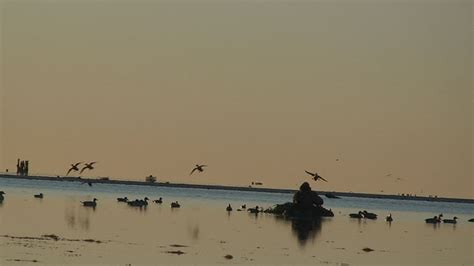 hunting from layout boat seadrift texas duck hunting goose hunt guides