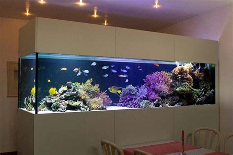 beautiful home fish tanks 1000 images about fantastic fish tanks on