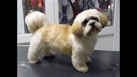how to cut shih tzu hair at home with scissors hair cut shih tzu grooming funnycat tv