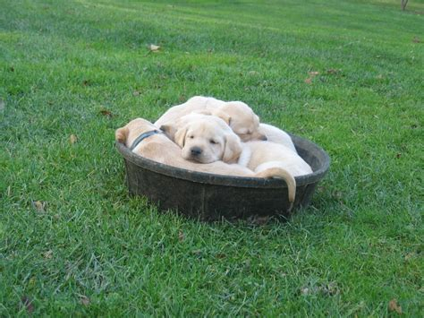how much should an 8 week puppy sleep angie jurisson more pictures every boy should two things a and a