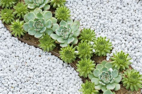Succulent Rock Garden Everything You Need To About Succulents Mnn Nature Network
