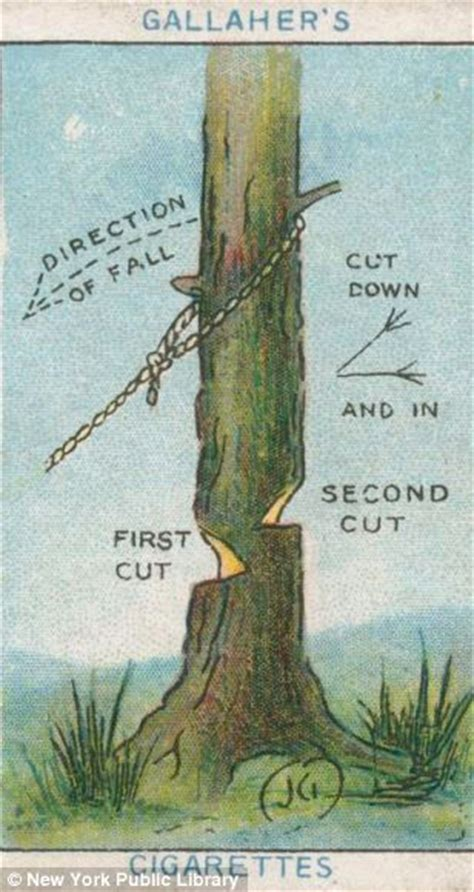 how to cut a tree diagram how to chop a tree and stop a mad with a walking