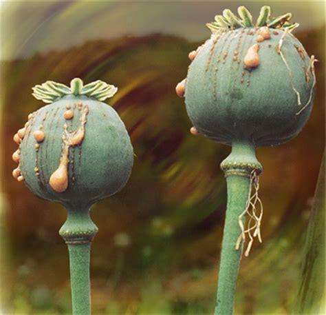 Opium by Blog 3 Opium Shelbykanderson