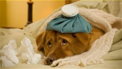 how to get rid of parvo in puppies parvo symptoms including diarrhea in dogs