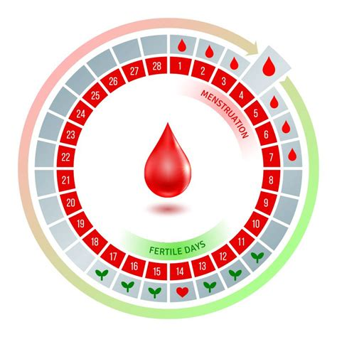 Menstrual Cycle And Ovulation Calendar Track Ovulation With Irregular Periods American Pregnancy