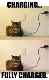 Mere Cat Meme - hilarious https www facebook com