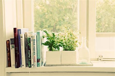 window herb garden the 5 best herbs to grow for a windowsill herb garden