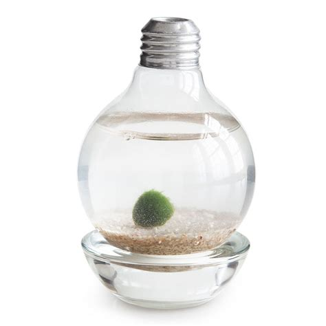 Light Bulb Terrarium by Marimo Moss Light Bulb Terrarium The Green