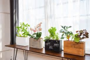 Window Planters Indoor by Modern Sprout Automatically Waters And Feeds Your Plants