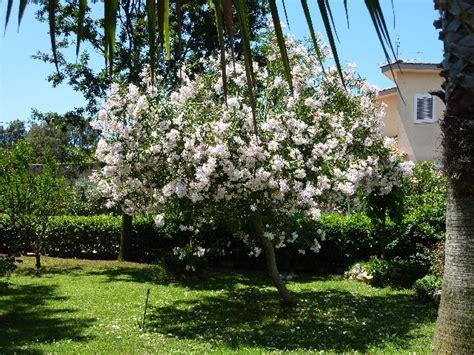 piante da appartamento con fiore pianta verde da appartamento con fiore bianco decorare
