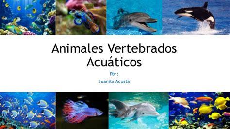 100 ejemplos de animales terrestres y acuticos animales vertebrados acuaticos
