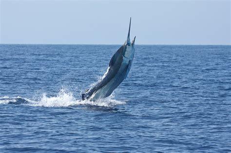 hawaiian fishing boat names marlin magazine names kona top marlin fishing destination