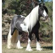 How Pretty Do You Think These Two Horses Are Post A