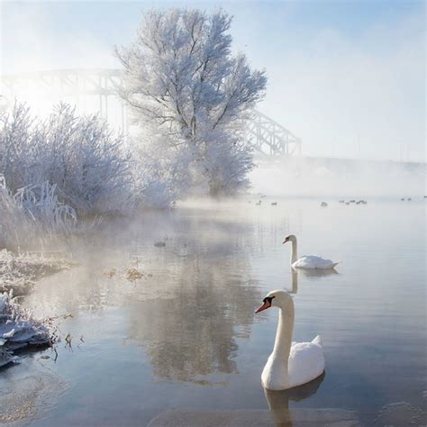 imagenes de otoño invierno paisajes 20 fascinantes paisajes de invierno curiosidades
