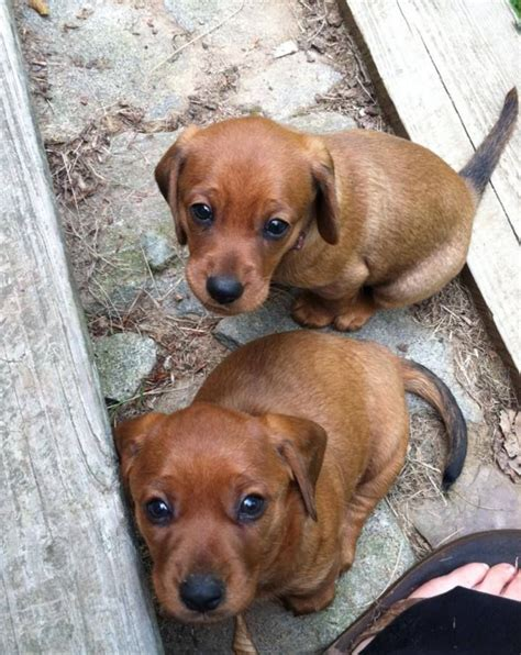 petfinder puppies pin by shannon walsh on petfinder dogs