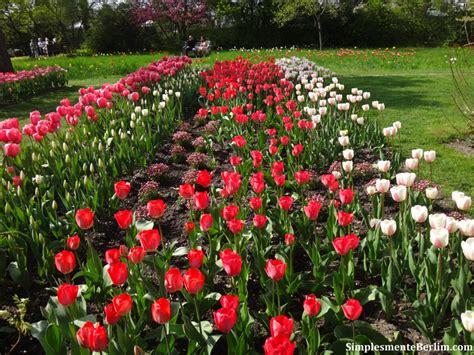 Britzer Garten Rotkopfweg by Tulipan Festival Da Tulipa