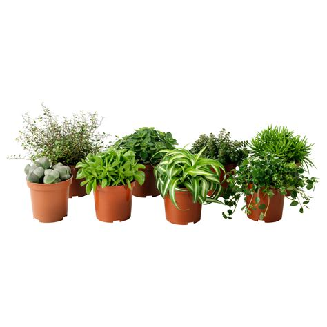 little plants plants plant pots stands dried flowers potpourri ikea