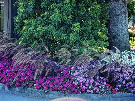 Florida Flower Garden 93 Best Ideas About Florida Landscape Plants I On Gardens Grasses And Bush