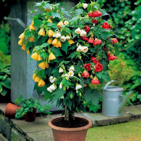 shrubs  containers gardening viral