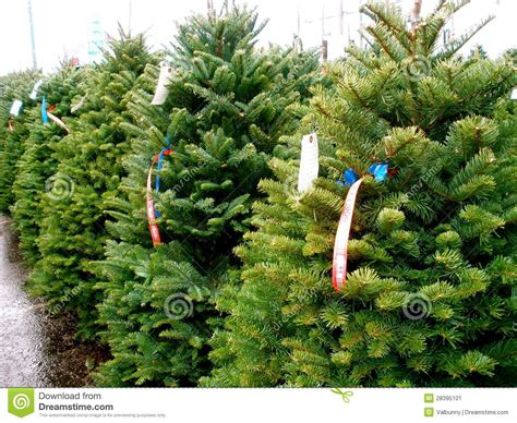 christmas tree lot stock image image 28395101