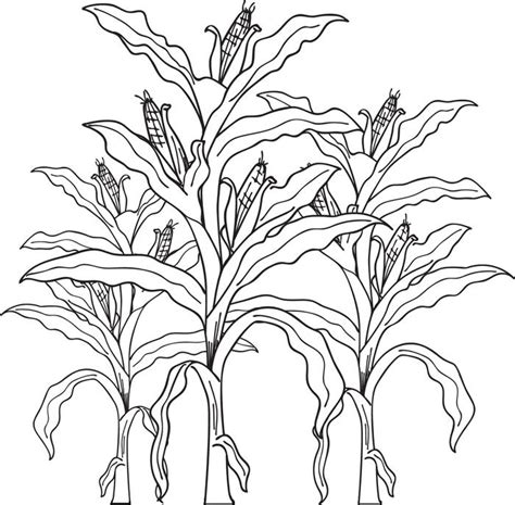 corn stalk template field with crops coloring pages corn stalks fall page for