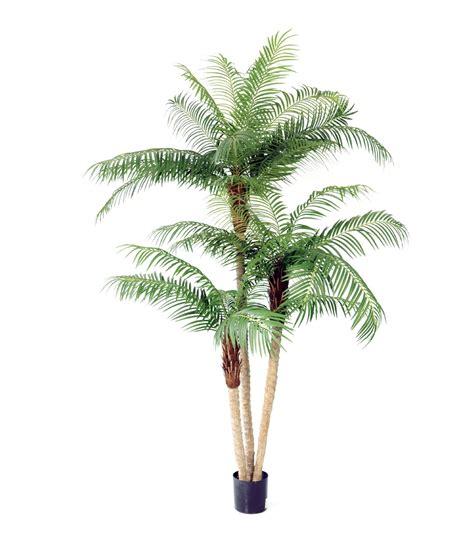 artificial palm tree pin description green bamboo wallpaper albums 20 on