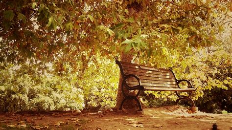 autumn park bench autumn bench landscapes nature park wallpaper