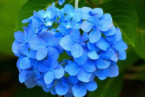 imagenes flores salvajes 5 fotos hermosas de flores silvestres