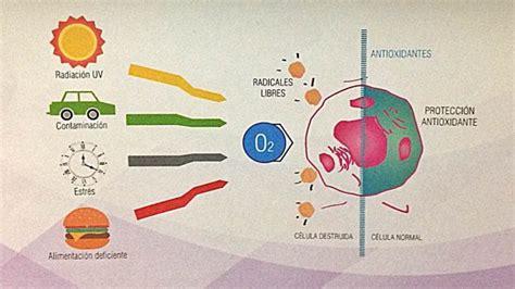 imagenes de radicales libres y antioxidantes 191 qu 233 son los radicales libres