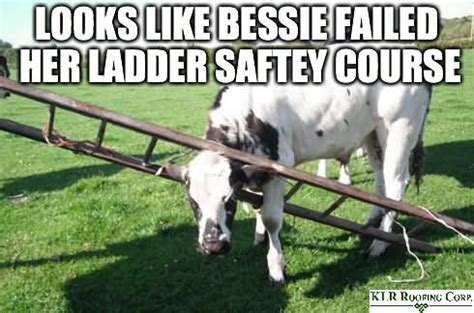 Ladder Meme - 35 most funny cow meme pictures and photos