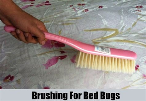 bed bugs cure pictures images on bed bugs natural cures for long