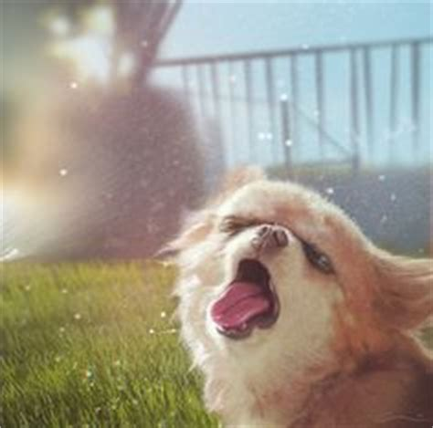 Dog Sprinkler Meme - 1000 images about silly sprinkler pets on pinterest