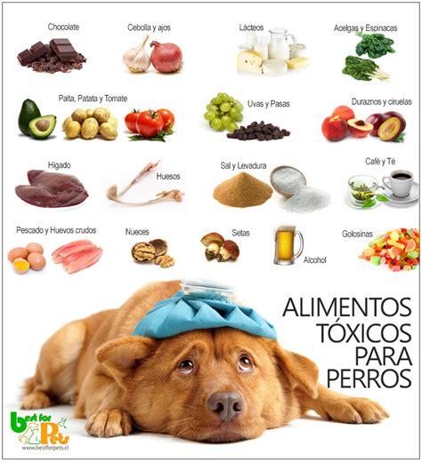 alimentos para perros nocivos para su salud best for pets - Alimentos Mascotas