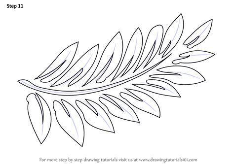 learn how to draw fern fronds plants step by step
