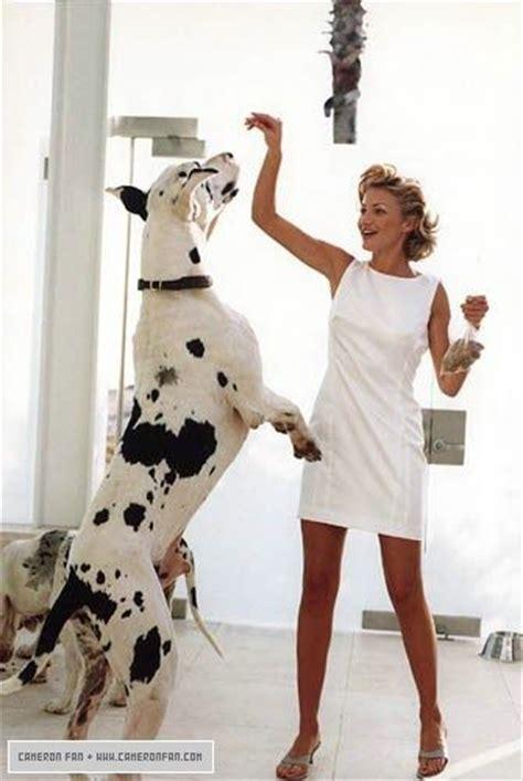 cameron diaz dog 25 best ideas about harlequin great danes on pinterest