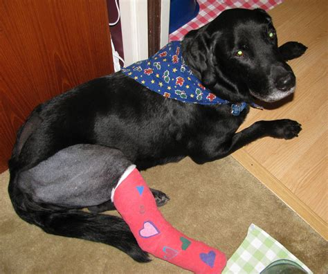 dogs with legs with broken leg breeds picture