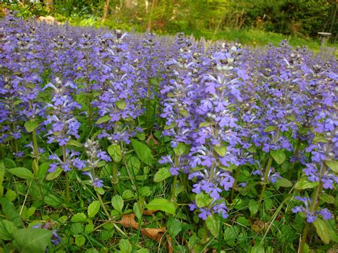top 28 flowers that cover the ground help what is