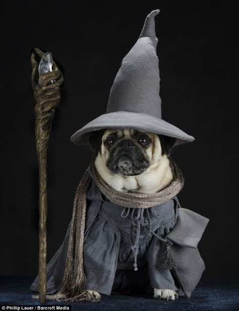 pug harry potter harry potter pug animals