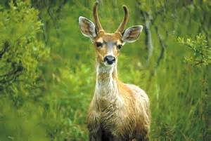 Plants That Live In The Tropical Rainforest Biome - sitka deer wikipedia