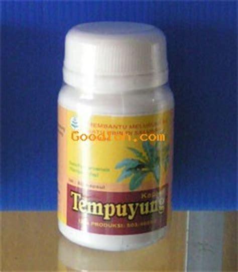 Obat Herbal Tempuyung tempuyung obat batu empedu kandung kencing hipertensi