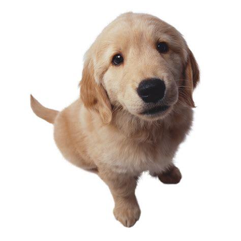 abotonada por su mascota consejos de fotografa no hay que ba 241 ar al perro con shoo de humano 191 por qu 233